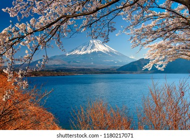 Mount Fuji with Cherry Blossom in the foreground, Lake Motosuko, Japan