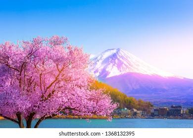 Mount Fuji and cherry blossoms which are viewed from lake Kawaguchiko, Yamanashi, Japan