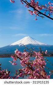 Mount Fuji, cherry tree