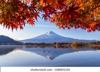 Mount Fuji with colorful maple leaf in autumn at Lake Kawaguchi at sunrise,Yamanashi,Japan.Fujisan is the highest mountain in Japan.