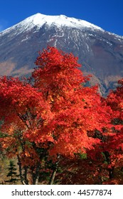 Mount Fuji with gorgeous Fall leaves in the foreground