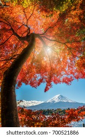 Mount Fuji, Japan from Lake Kawaguchiko in Autumn.