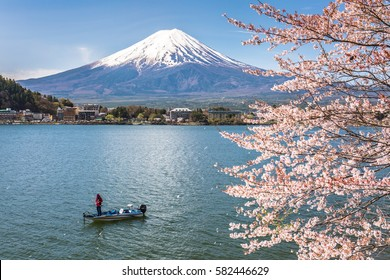 Mount Fuji and sakura cherry blossom in Japan spring season