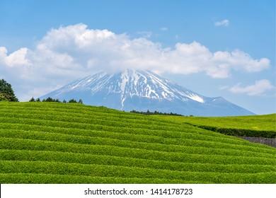 Mount Fuji and tea plantation at Shizuoka, Fuji mountain located on Honshu Island, is the highest mountain in Japan.