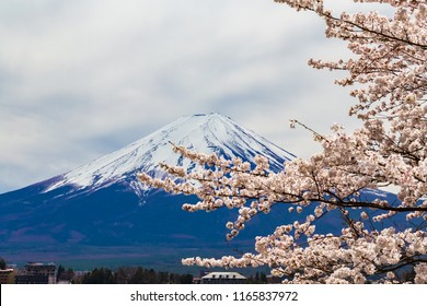 Mount Fuji.Foreground is a cherry blossoms.The shooting location is Lake Kawaguchiko, Yamanashi prefecture Japan.