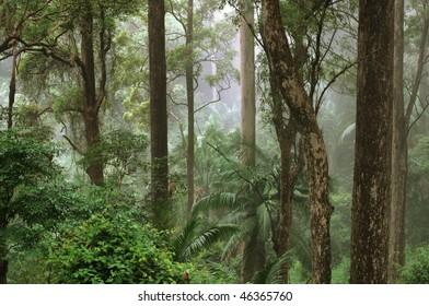 Mount Glorious, near Brisbane, Queensland, Australia