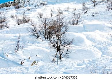 mount Hermon in the snow