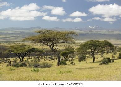 Mount Kenya and lone Acacia Tree at Lewa Conservancy, Kenya, Africa