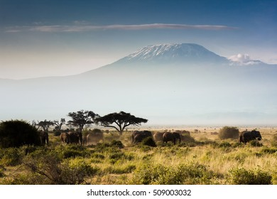 Mount Kilimanjaro from Amboseli with Elephants