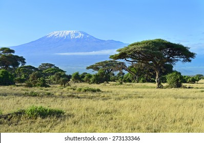 Mount Kilimanjaro in Kenya Amboseli National Park