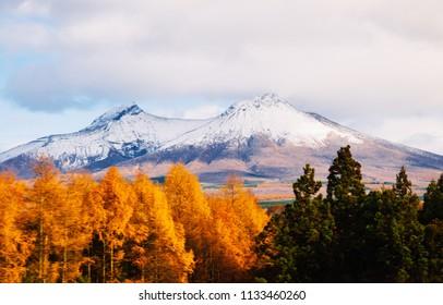 Mount Komagatake of Hakodateyama Hokkaido in winter with dry beautiful colored forest
