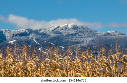 Mount Mansfield summit and ski resort Vermont USA  landscape with corn field behind at october