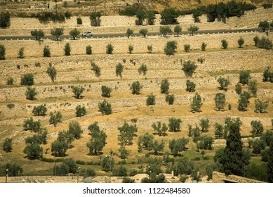 Mount of Olives in the holy city of Jerusalem, Israel