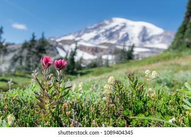 Mount Rainier National Park in Summer