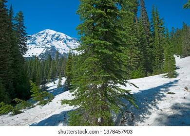 Mount Rainier from Nisqually Vista Trail, Mount Rainier National Park, Washington State, USA