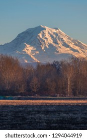 Mount Rainier rises above dead trees during a winter sunset from the valleys below the Washington volcano.