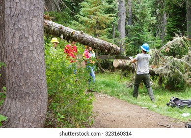 MOUNT RAINIER, WASHINGTON - AUG 3, 2015  - Trail crew removes a fallen log from the trail, Mount Rainier National Park