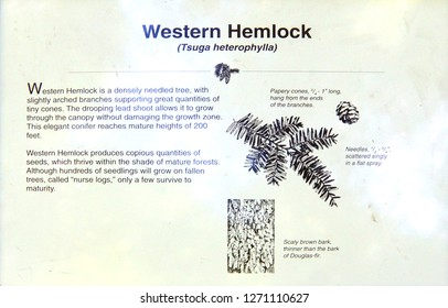 MOUNT RAINIER, WASHINGTON - AUG 4, 2015  - National Park plaques showing native cedar, fir and hemlock,  in the Grove of the Patriarchs, Mount Rainier National Park