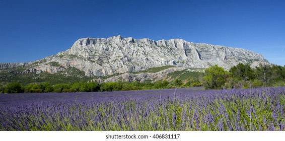 Mount  sainte Victoire and lavender