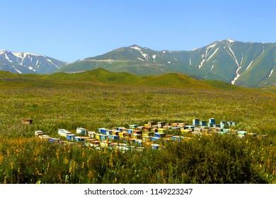 Mountain apiary. Kyrgyzstan