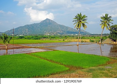 The mountain Arunachala is the oldest mountain on earth and modern research has confirmed that Arunachala is older than the Himalaya's and indeed one of the oldest mountain on earth in Tiruvannamalai