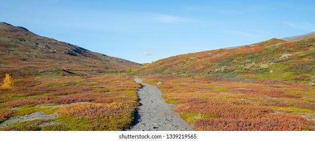 Mountain in autumn. Abisko national park in Sweden.