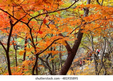 The mountain autumn landscape with colorful forest in Juwangsan National Park, South Korea