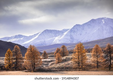 Mountain autumn landscape, valley, mountains with snow in the background, tree, Altai, Russia