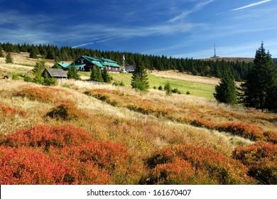 Mountain autumn meadows in Jeseniky, Czech Republic