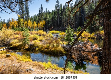 A mountain Autumn scenery along a stream