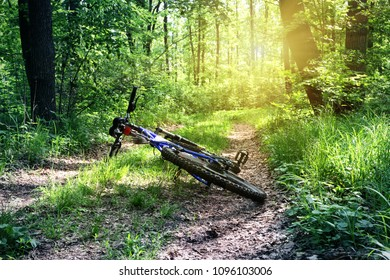 Mountain bike lies on the road in a green forest. Summer landscape. The concept of rest and freedom.