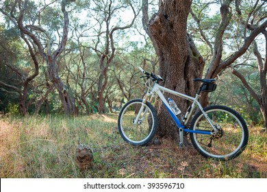 Mountain bike in an olive grove, against a tree; copy space