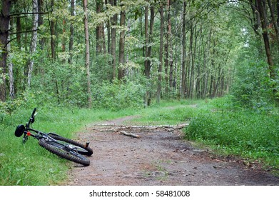 Mountain bike on the forest path.