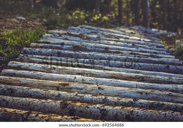 Mountain bike trail made of arranged tree trunks in the forest. Wooden footpath in the woods. Trimmed barren logs aligned as biking track or hiking lane up in the mountains.