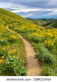 Mountain bike trails in the Boise foothills, Idaho