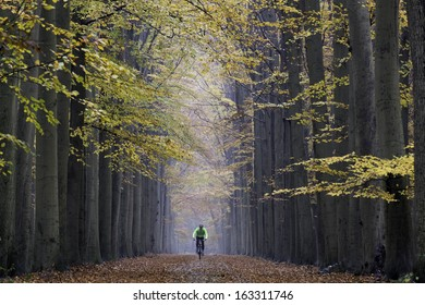 Mountain biker, cyclist, speeding in beautiful symmetrical lane of trees in colored autumn wood, unrecognizable by motion blur, on Valkenberg estate in Breda, The Netherlands