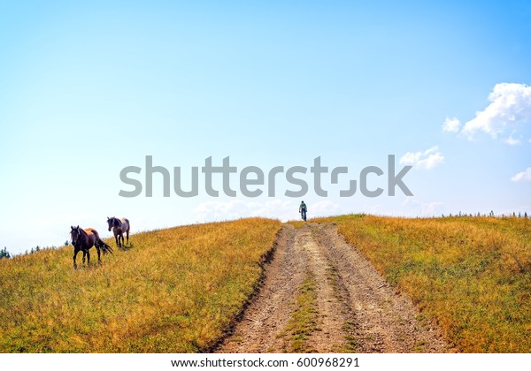 Mountain biker and two horses on meadow. Man riding the mountain bike on the trail to horizon line.  Extreme sport concept.