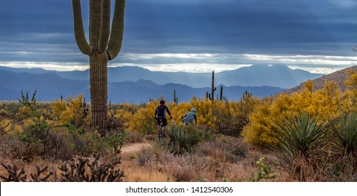 Mountain Bikers riding On Desert Trail In North Scottsdale, AZ with mountains and sun rays in background.