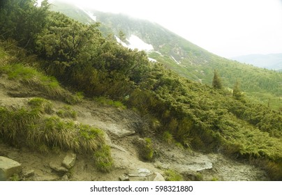 Mountain chain in The Carpathians (Ukraine). Beautiful mountain forest landscape before storm. Amazing Green forest in clouds.