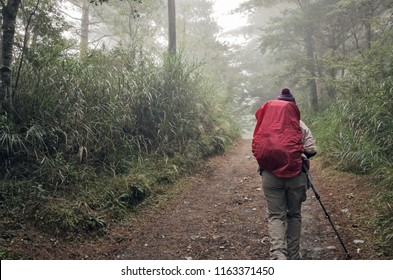 mountain climbers walking on the path in the mist of forest