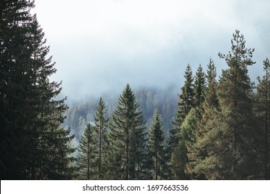 Mountain in the clouds. Autumn forest in Alps