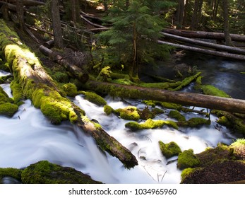 The mountain cold and fresh waters of Clearwater Falls rushing over moss covered rocks and slick wet logs on a sunny spring morning in Southwestern Oregon.