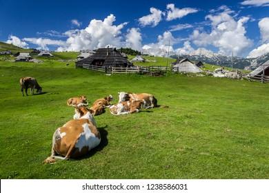 Mountain cottage hut or house on idyllic hill Velika Planina. Eco farming.Travel destination for family hiking. Kamnik Alps, Slovenia.