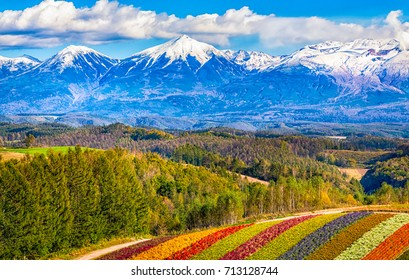 Mountain covered with snow,Colorful flower field,Hokkaido,Japan
