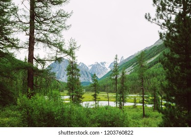 Mountain creek behind coniferous trees against giant snowy mountains. Water stream in brook. Rich vegetation and conifer forest of highlands. Amazing atmospheric landscape of majestic nature.