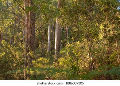 Mountain Creek Camping Area, Alpine National Park, VIC, Australia
