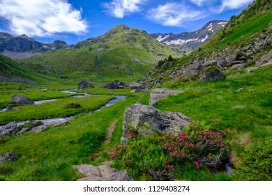 Mountain creek in the french pyrenees with pasture and wildflowers, near Astion in Ariege