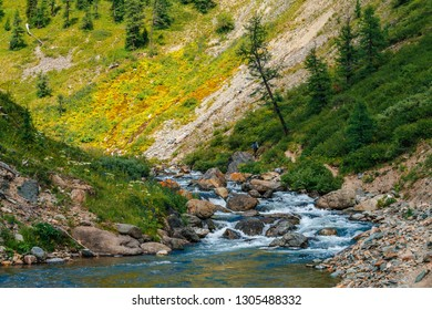 Mountain creek in green valley in sunny day. Fast water stream. Rich highland flora and coniferous trees on mountainside. Amazing mountainous vegetation. Wonderful scenic landscape. Colorful scenery.