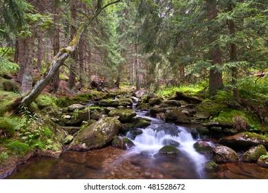 Mountain creek in the Krkonose national park forest, Czech Republic