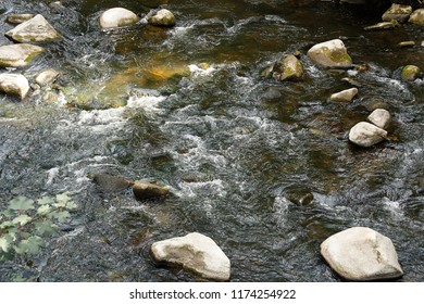 Mountain creek or river. Turbulent stream of water flowing between stones in a concept of virgin nature, ecology, environment or ecotourism.